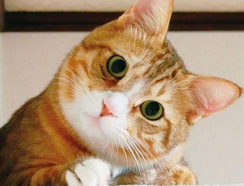 ペットを守れるのは自分だけ!!  安心できるようペットの防災を考えましょう【ねこ編】