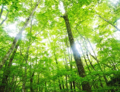 目的は必要なし!いま森へ行くべき理由  科学的に証明された凄い森林浴効果5選