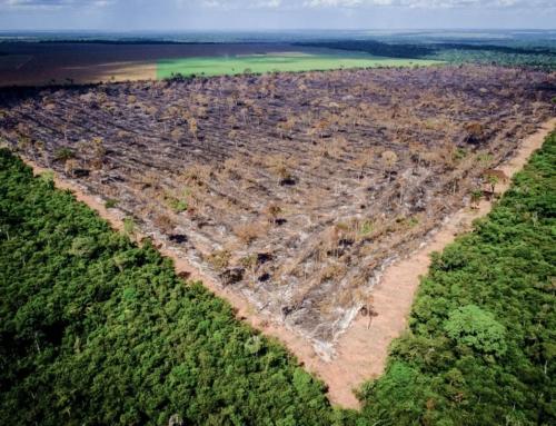 増え続ける犯罪による環境破壊  森消滅の原因は私たちでした…